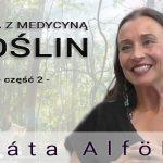 Praca z medycyną roślin – część 2 – Beáta Alföldi